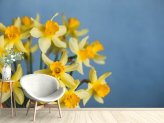 Yellow narcissus or daffodil flowers on blue background. Selective focus. Place for text.