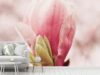 Blüte einer Magnolie - Magnolia