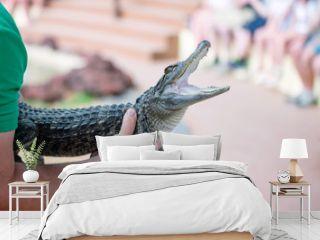 bébé crocodile en gros plan