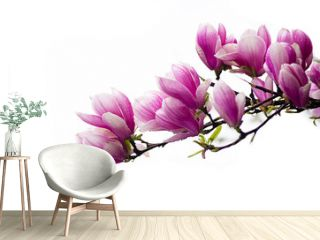 Large and delicate flowers magnolia
