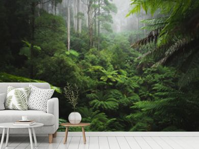 Lush Rainforest with morning fog