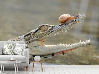 crocodile, snails,