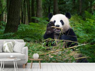 Panda bear eating bamboo and wave