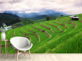 Green terrace rice field in Chiangmai , Thailand