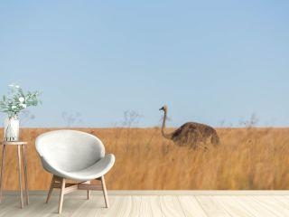 Female ostrich in long grass