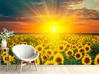 Sunflower fields during sunset. Beautiful composite of a sunrise over a field of golden yellow sunflowers.