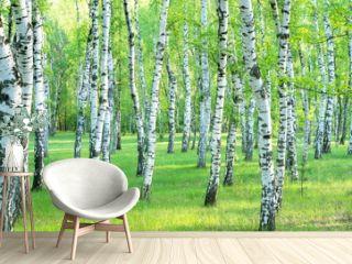 birch grove in the summer. Landscape
