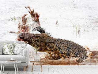 Nile Crocodile With Kill in Mara River