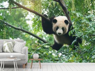 Giant panda baby over the tree.