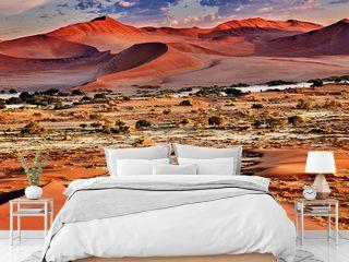 desert of namib with orange dunes