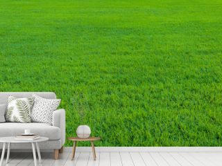 Background of beautiful green grass pattern