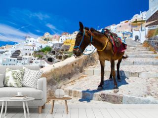 Donkey taxis in Santorini, Greece