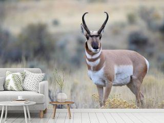 Antelope pose