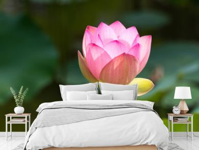 green symbol of elegance and grace with a beautiful pink lotus