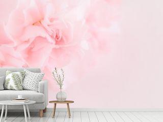 Pink Carnation Flowers Bouquet. soft filter.