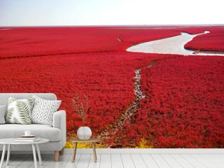 The Red beach is located in Panjin city, Liaoning, China.  This is the biggest wetland featuring the red plant of Suaeda salsa in the world.
