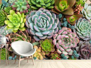 Rectangular arrangement of succulents  cactus succulents in a planter