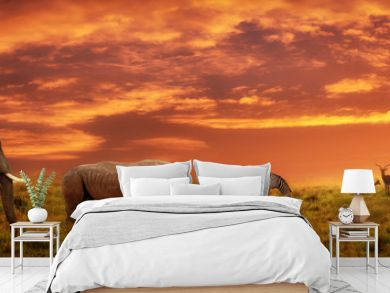 African sunset panoramic background with silhouette of animals