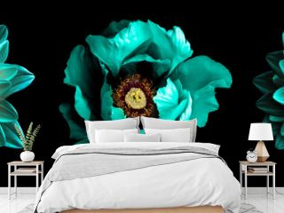 3 surreal exotic high quality turquoise flowers macro isolated on black. Greeting card objects for anniversary, wedding, mothers and womens day design