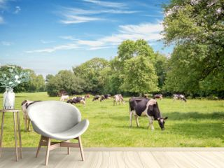 Norman cows grazing on grassy green field with trees on a bright sunny day in Normandy, France. Summer countryside landscape and pasture for cows