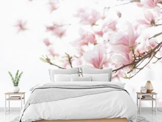 Beautiful spring background. Close up of blossoming magnolia flowers