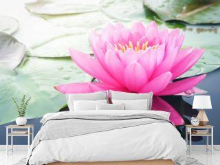 Beautiful lotus flower, lily water