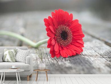 gerbera rouge coupé sur table en bois