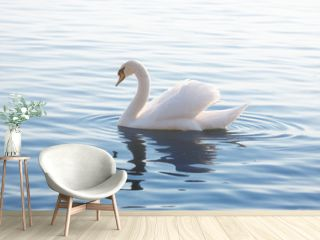 Tender White Swan is Swimming on the Calm Water