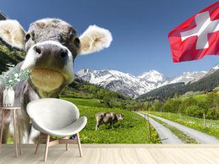 Kuh in der schweiz