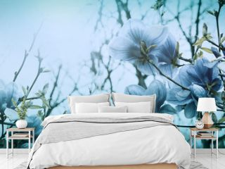 Beautiful blossoming magnolia flowers in sundawn backlit light, shallow depth. Soft dark blue vintage toned. Greeting card template. Nature panorama background. Copy space banner
