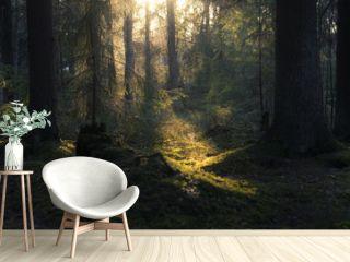 Summer forest in Finland