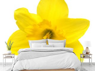 Yellow daffodil flower isolated on white background. Flat lay, top view