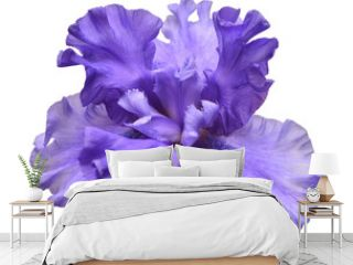 Blooming iris flower isolated on white background. Summer. Spring. Flat lay, top view. Love. Valentine's Day