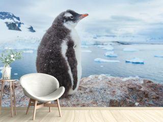 gentoo penguin in Antarctica, antarctic nature wildlife landscape