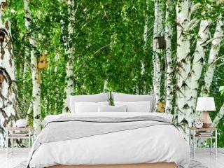 birch grove with birdhouses