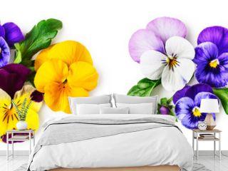 Pansy viola tricolor flowers set