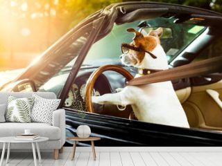 dog drivers license  driving a car