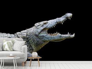 Crocodile on black background