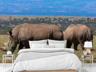 Nashorn-Schutzgebiet Nakuru-Nationalpark, Kenia