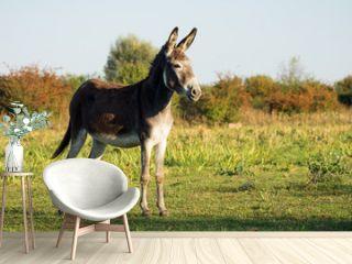 donkey on pastureland