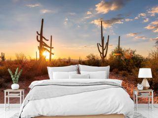 Travel in Arizona desert at sunset with Saguaro cacti in Sonoran Desert near Phoenix, Arizona.