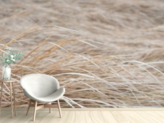 dry grass in a meadow on a foggy day, panoramic landscape. Web banner for design.