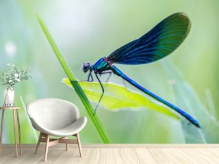 a beautiful dragonfly sits in the grass in a meadow