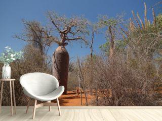 Landscape with Adansonia grandidieri baobab tree in Reniala national park, Toliara, Madagascar