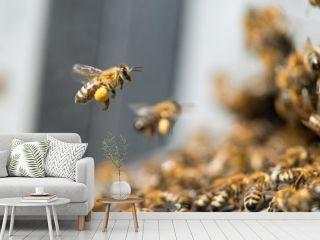 honey bee working