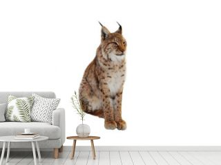 lynx (lynx izabellinus) isolated