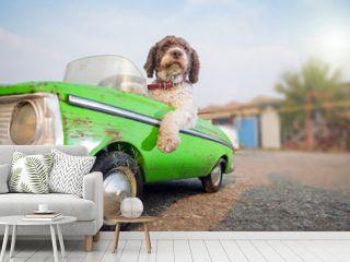 cute dog driving small retro car