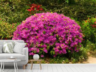 Rhododendron, Azalee, Garten