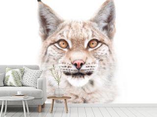 European lynx face isolated on white background