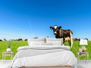 cows graze on a green field in sunny weather, layout with space for text